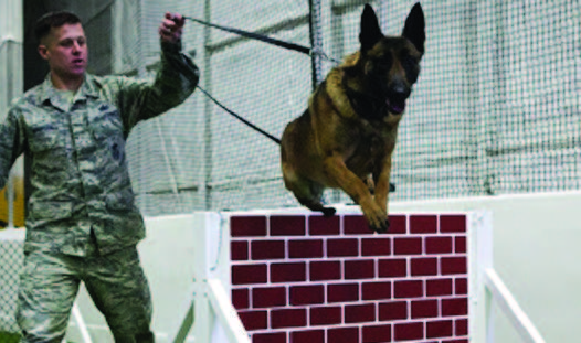 BigTop Fabric Structures Military working dog facilities